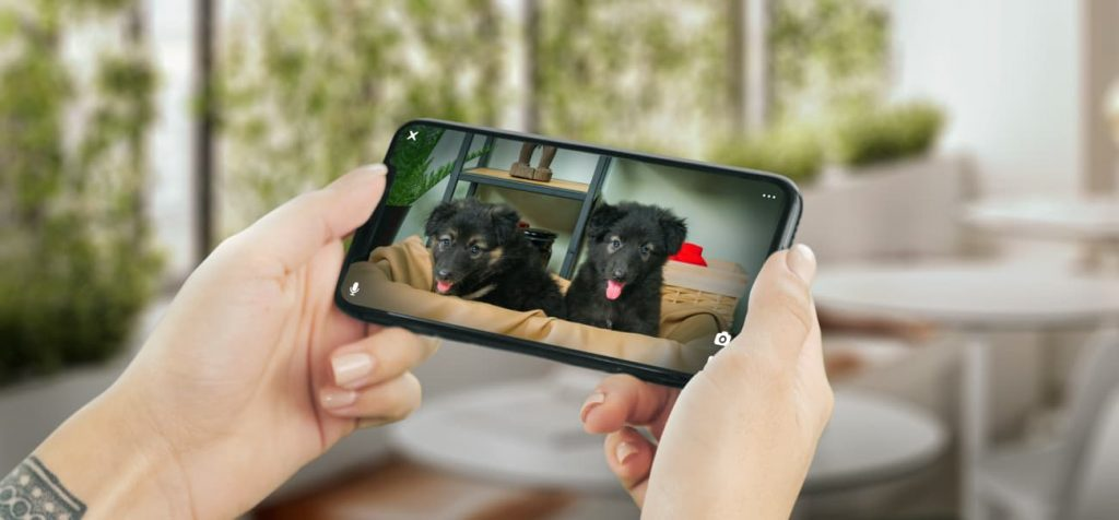 Petcube, Small Camera For Pets That Are Really Cheap